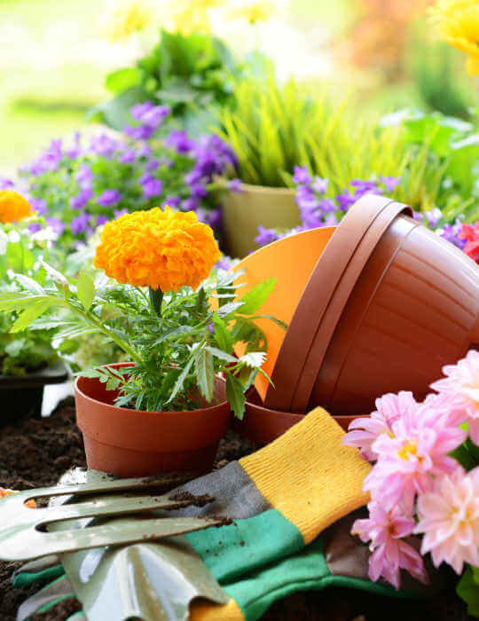 flowers and gardening tools on table