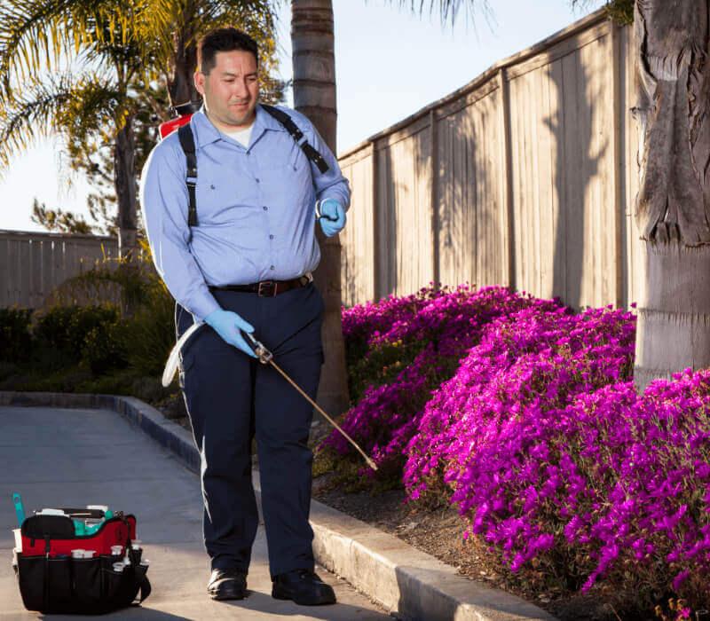 Man spraying bushes