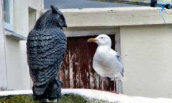 bird and owl on wall