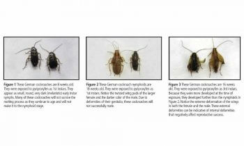 cockroaches exposed to pyriproxyfen