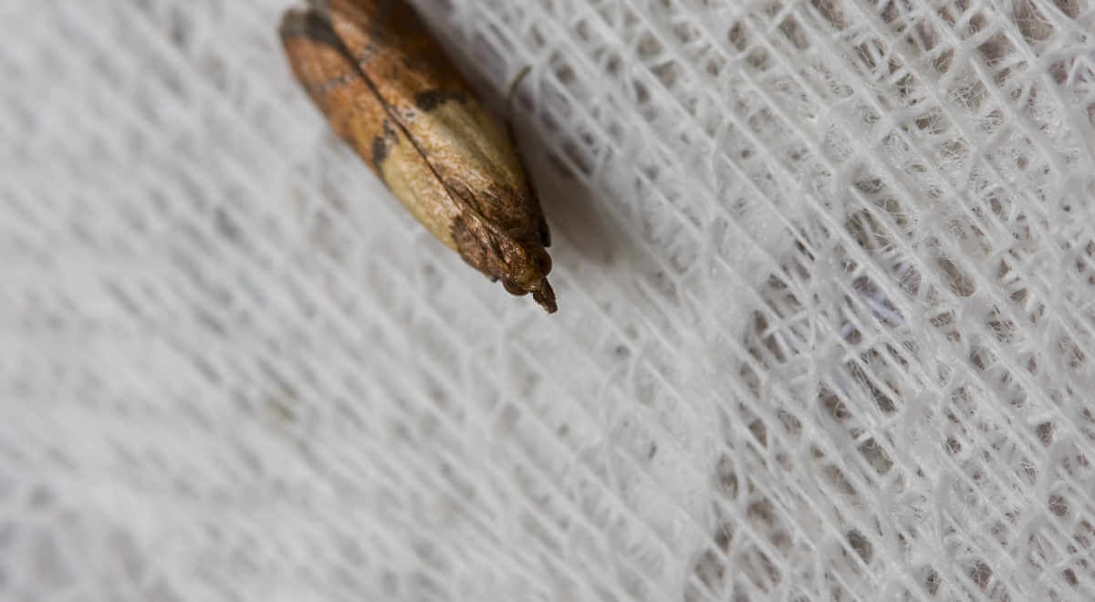 Moth on fabric