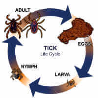 Ticks | Resources + Products | MGK®