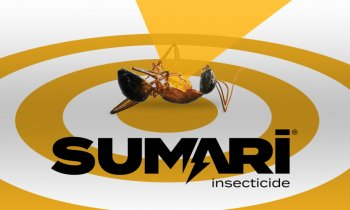Sumari Insecticide logo on gold target with upside down ant