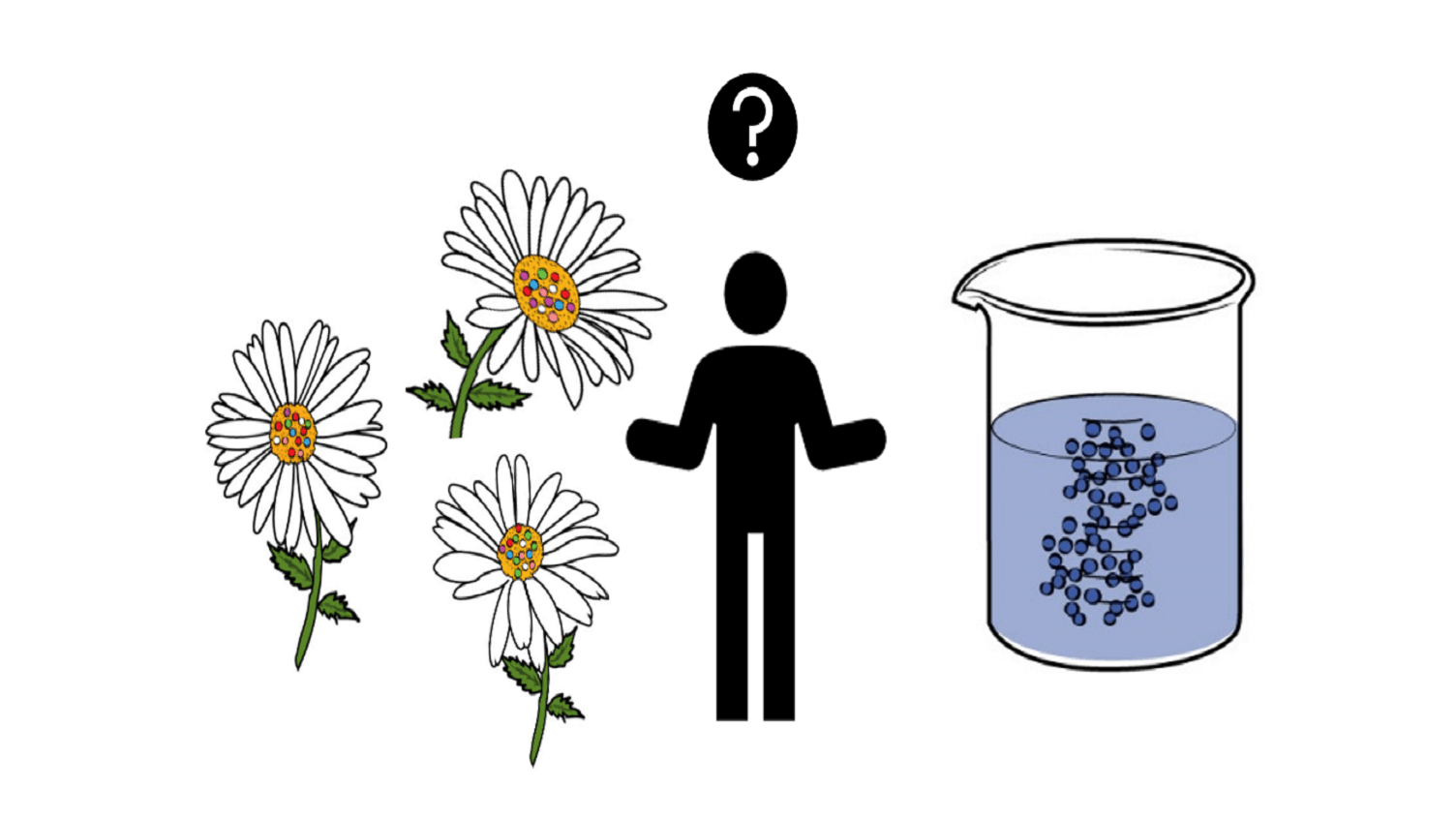 graphic representation of daisy flowers and lab beaker with blue liquid, human between them shrugging shoulders with question mark above head