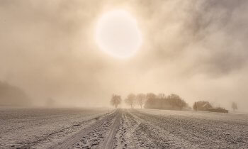 Wintering Pests Blog: Field covered on snow, barn and trees in distance, sun cuts through an overcast day