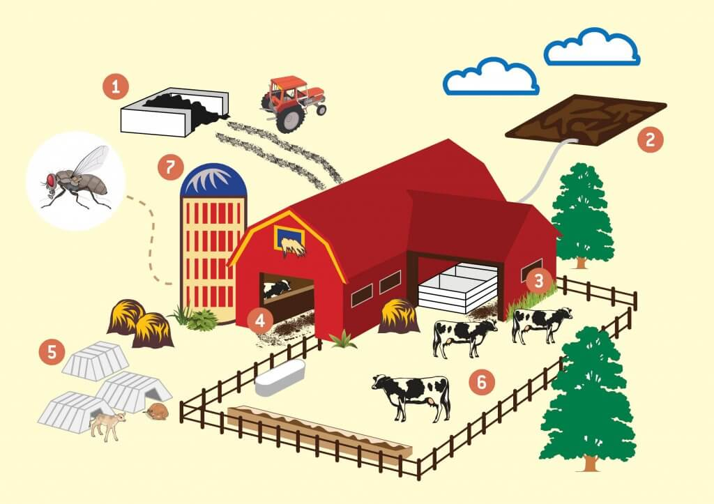 Fly Control in Dairies - graphic depiction of farm and cattle areas