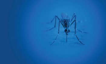 National Mosquito Week: blue background with mosquito