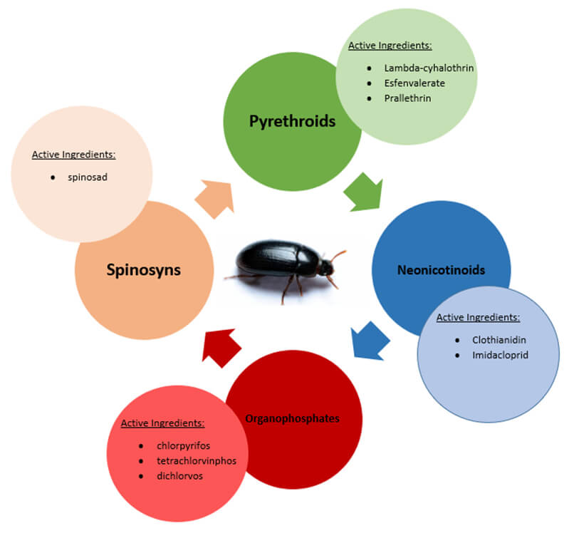 Insecticide Classes& Active Ingredients: Pyrethroids, Neonicontinoids. Organophosphates, Spinosyns